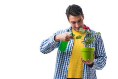 The young man with flower pot isolated on white. Young man with flower pot isolated on white Stock Photo