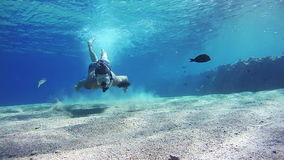 Young Man Free Dives Snorkeling and Floating Through the Frame, Underwater View in Red Sea, Egypt. Man dives into the depths of the blue water, with a mask and stock video footage