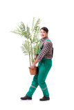 The young man gardener isolated on white Stock Photography