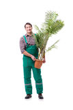 The young man gardener isolated on white Royalty Free Stock Image