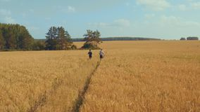 A young man and a girl with sports figures in sportswear are running along a cereal field. Aerial view. Summer day. In the background a blue sky with clouds stock video footage