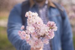 A young man giving boquet of pink flowers, spring, love and roma. Ntic concept. Horizontal Love Paris Japan Royalty Free Stock Photo