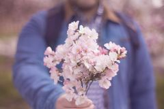 a young man giving boquet of pink flowers, spring, love and romantic concept. Horizontal stock photography
