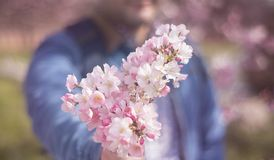 a young man giving boquet of pink flowers, spring, love and romantic concept. Horizontal royalty free stock photo