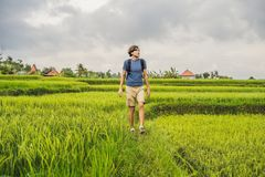 Young man on Green cascade rice field plantation. Bali, Indonesia.  royalty free stock photos