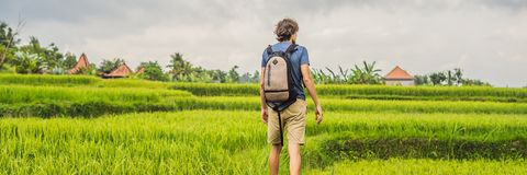 Young man on Green cascade rice field plantation. Bali, Indonesia BANNER, long format. Young man on Green cascade rice field plantation. Bali, Indonesia. BANNER stock images