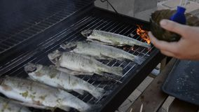 Young man grilling whole fishes on grate in garden. Grilled marinated fresh trouts over the charcoals on barbecue grill on summer stock video footage