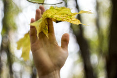 Young man hand holding a yellow leaf. Young man hand holding a yellow maple leaf Stock Image
