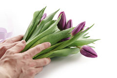 Young man hands holding bunch of fresh purple tulips isolated on white. On white background Royalty Free Stock Photos