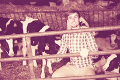Young man happily stroking cows. Cheerful smiling man happily stroking cows on the farm Stock Photo