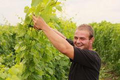 Young man. Happy young man working in vineyard Stock Photos