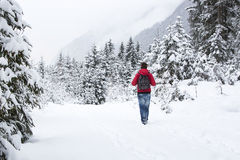 Young man hiking in wintry forest landscape Stock Photography