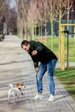 Young man with his dog, Jack Russell Terrier. On the city street in spring time royalty free stock image