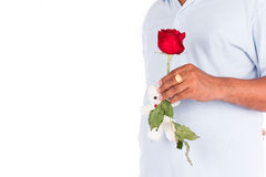 Young man hold rose flower Royalty Free Stock Image