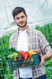 Young man holding a box of vegetables. In greenhouse Royalty Free Stock Photos