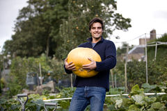 A young man holding a pumpkin on an allotment Royalty Free Stock Image