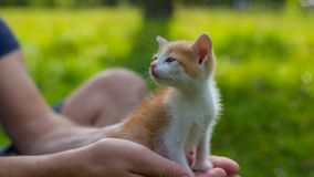 Young man is holding a small kitten in his hands. Stock Photos