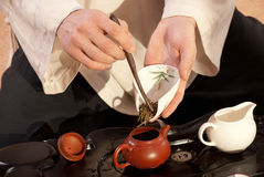 Young man holds a Chinese tea ceremony Royalty Free Stock Image