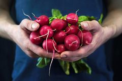 A young man holds a red radish. In his hands a new crop Stock Images