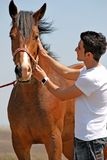 Young man and horse Royalty Free Stock Photo
