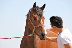 Young man and horse Royalty Free Stock Photos