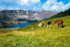 Young Man and Horse. Pesica lake, Bjelasica mountain, Montenegro stock photography