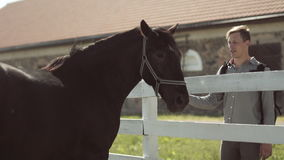 Young man at the horse in ranch stock video footage