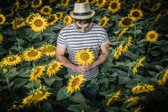 Young man i sunflower field. Portrait of modern guy standing in sunflower field and holding flower Royalty Free Stock Photo