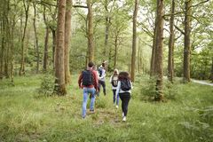 A young man leads a group of five young adult friends walking in a forest during a hike, back view stock images