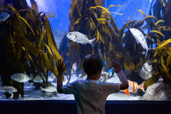 Young man looking at fish and algae Royalty Free Stock Photos
