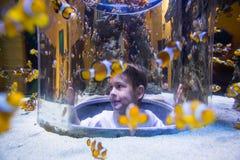 Young man looking at fish into a circular tank Royalty Free Stock Photography