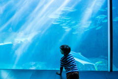 Young man looking at fish in a giant tank Royalty Free Stock Photography