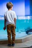 Young man looking at manta ray Royalty Free Stock Image