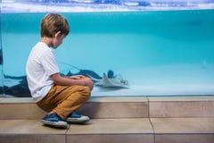 Young man looking at manta ray Royalty Free Stock Photo