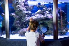 Young man looking at sea snake royalty free stock images