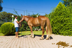 Young man looks after his brown horse Stock Photography