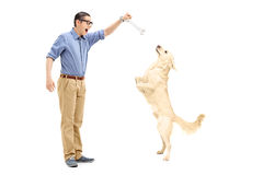 Young man luring a dog with a bone Royalty Free Stock Photography