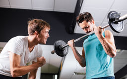 Young man motivating gym buddy during bicep exercise Royalty Free Stock Image