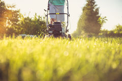 Young man mowing the grass Stock Photos