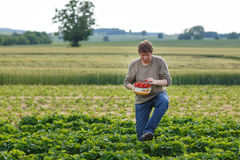 Young man on organic strawberry farm Royalty Free Stock Images