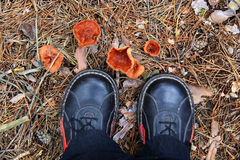 Young man picking mushrooms. In autumn forest Stock Images