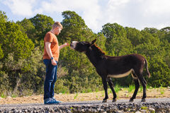 Young man playing and feed wild donkey, Cyprus, Karpaz National Park Wild Donkey Protection Area. Royalty Free Stock Photo