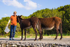 Young man playing and feed wild donkeys, Cyprus, Karpaz National Park Wild Donkey Protection Area. Royalty Free Stock Images