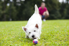 Young man playing with his dog in the park. Young man playing with his dog in the summer park Stock Photo