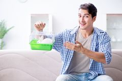 The young man playing with pet rabbit at home Royalty Free Stock Photography