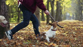 Young man playing with two dogs in autumn park stock video