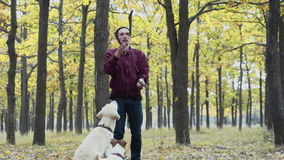 Young man playing with two dogs in autumn park stock video footage