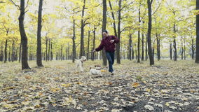 Young man playing with two dogs in autumn park stock footage