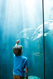 Young man pointing fish in a illuminate tank Royalty Free Stock Photos
