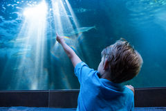 Young man pointing the light across the tank Royalty Free Stock Photos